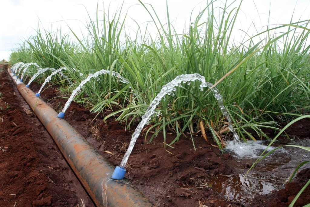 Irrigators say in seven years, the cost of power to run their farm has jumped by 97%.