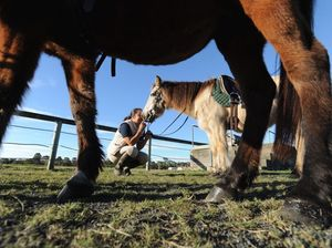 Riding for the Disabled desperately needs younger horses