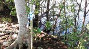 This is where the body was found on the banks of the Tweed River, Tumbulgum.