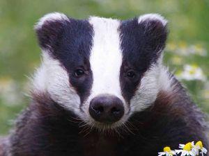 British like killing their wildlife too