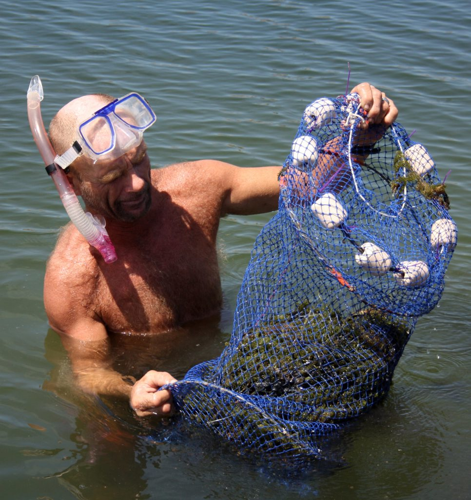 James Mitchell from Burnett Heads harvesting the seaweed from the farm's ponds.