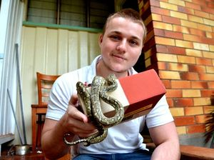 Package thieves get nasty surprise, return stolen tarantulas