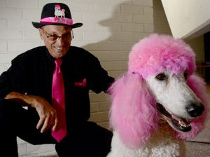 Poodle struts her stuff in popular parade