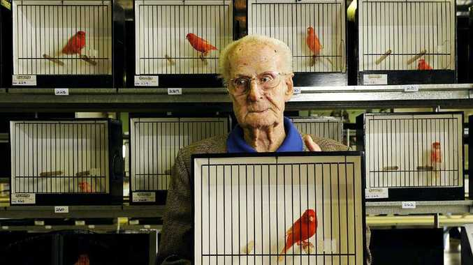 FEATHERED FRIENDS: Colin Splleken takes in the competition at the Ipswich Bird Spectactular on Sunday at the Ipswich Show Grounds.