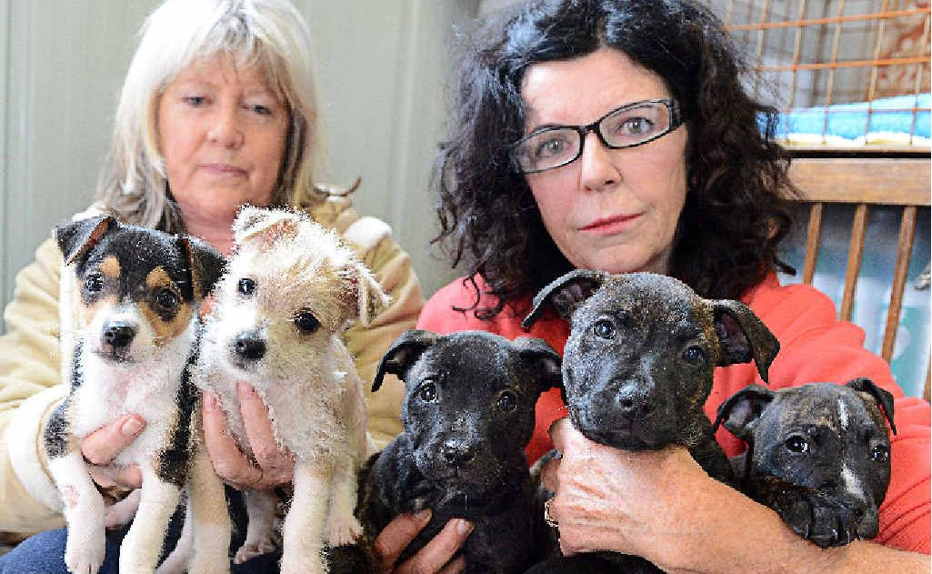 Pictured at the Animal Rights and Rescue Shelter in South Lismore are volunteer Debbie Edwards, left, and co-ordinator Barbara Steffensen, with small terrier cross puppies dumped in Kyogle, and staffy cross pups rescued in Lismore.