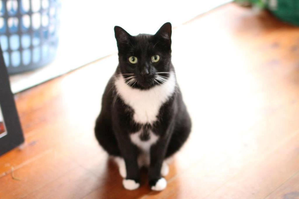 Rebecca Davis's family cat Gary went missing in Sydney last year.
