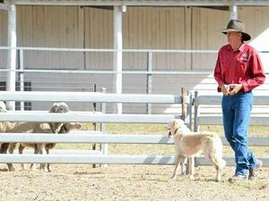 Supreme trial tests top dogs, handlers