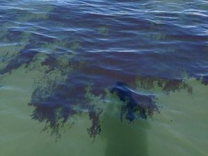 "MSQ inspects ""oily patches"" found off Reef in north Qld"