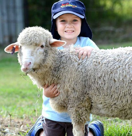 WOOLLY FRIEND: Marcus Christensen, 4, with 'Sparkle' the sheep at Blacksoil Bush Kidz.