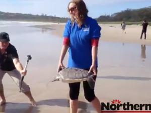 Australian Seabird Rescue release green sea turtle