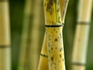 Dad  in bamboo beating case says it was discipline
