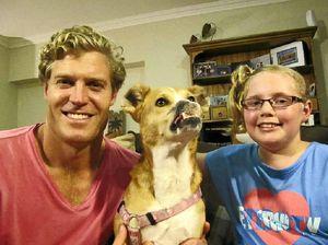 How starving dog became TV star