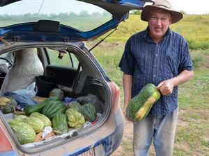 'Mutant' pumpkins produced from Qld flood water
