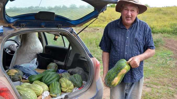 PUMPKIN PROBLEMS: Jack McConnell's pumpkin patch has been producing some strange shaped vegetables after the flood.