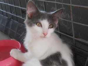 Cat adoption day on June 17