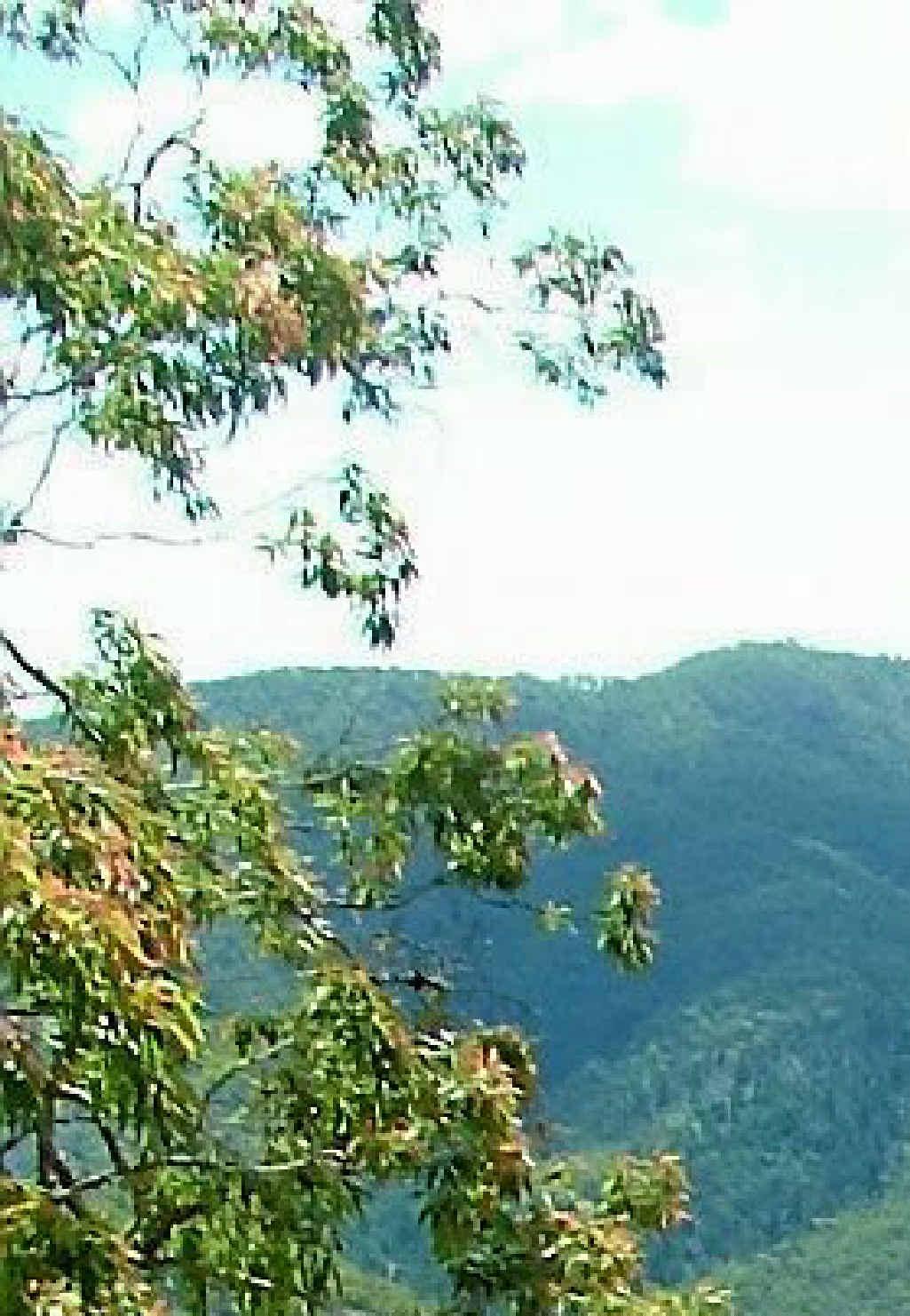 A view of Kroombit Tops.