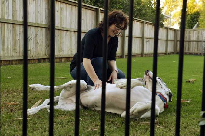 Tracey Woolford with Apollo the great dane seen through a fence. Residents in Augustine Heights have been asked to be on their guard for dog-nappers. Photo: Claudia Baxter / The Queensland Times