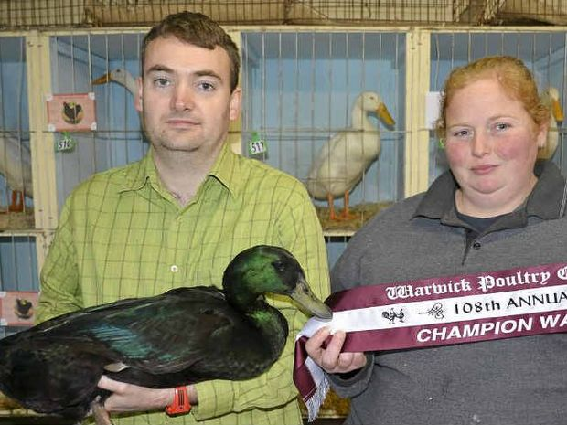 NICE BIRD: Water fowls winner Jim Innes with his Cayuga Drake, and steward Rebecca Galloway at the annual Warwick Poultry Club Show.