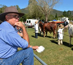 ON SHOW: Peter McFarlane watches as Remy Streeter and Lane Sturdy parade their cattle.