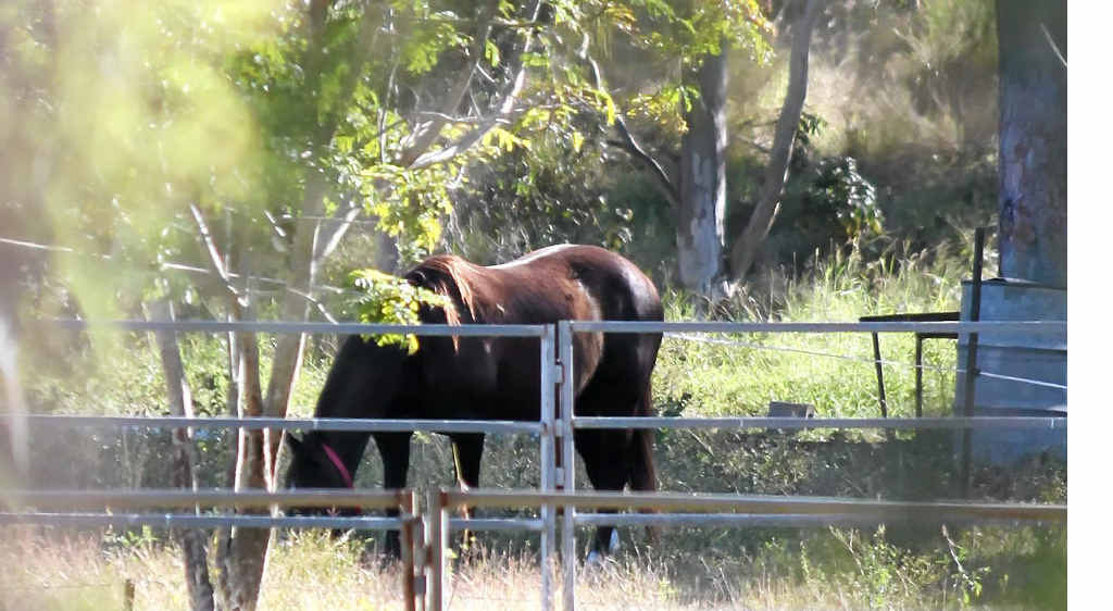 Experts say vaccinating horses is crucial if we are to defeat the deadly hendra virus.