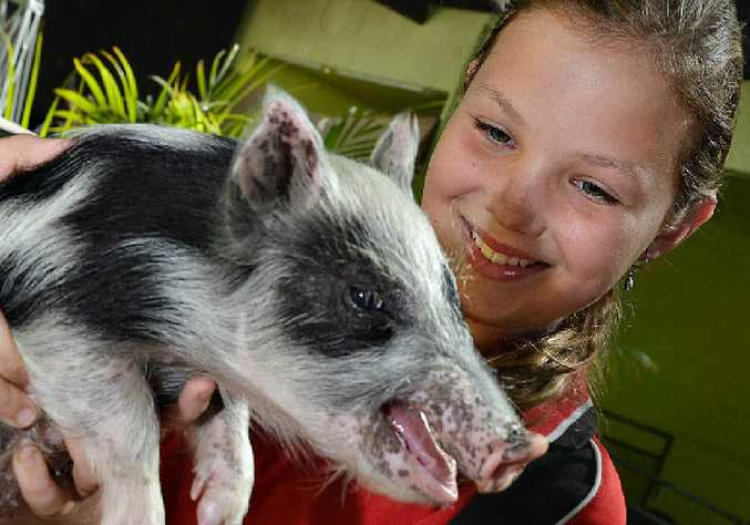 Kimberley Tonna, of Mackay, makes friends with a piglet at Melville's Animal Farm's petting zoo at Mackay show.