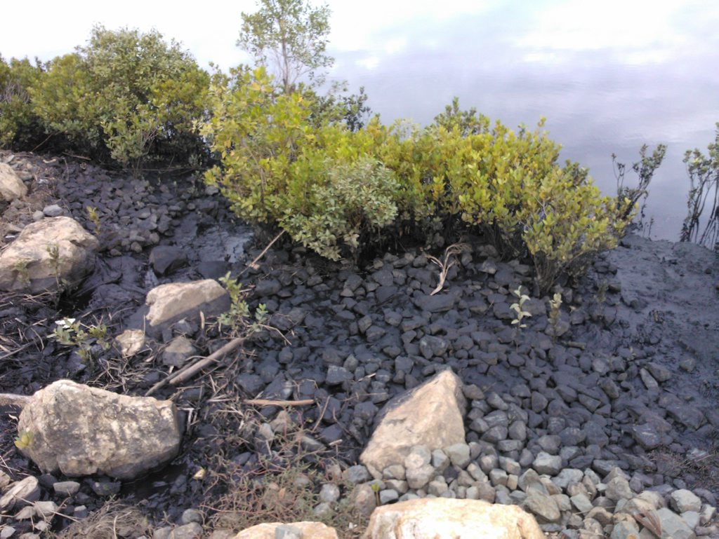 Black spot: Sludge found in Gladstone water ways caused by what is believed to be coal from neighbouring train depot at Callemondah. Photo Contributed