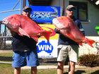 CLASSIC CATCH: Steve Foster holding his 13.7kg red emperor and Craig Foster holding his 12.7kg red emperor at the VMR Bundaberg Fishing Classic. Photo: Graham Kingston