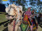 Camel ride, Madison, 6, left, with sister Teliah Hempseed, 9, at the Mt Larcom Show. Photo Brenda Strong / The Observer