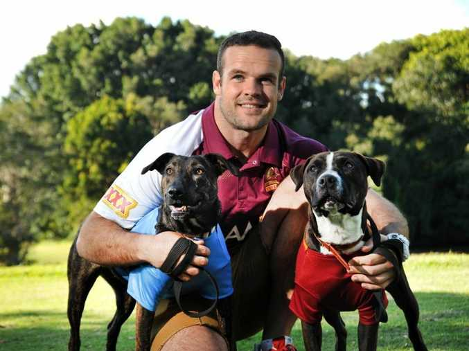 Queensland State of Origin player Nate Myles with RSPCA rescue dogs, Ollie (Maroon) and Lulu (Blue).