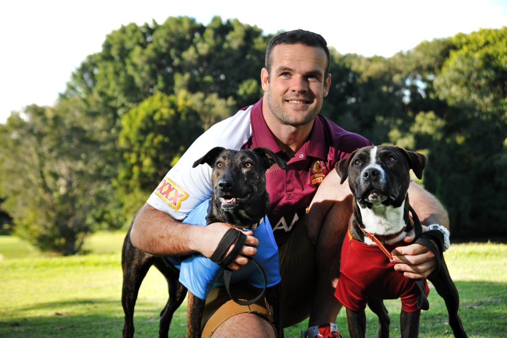 Image for sale: Queensland State of Origin player Nate Myles with RSPCA rescue dogs, Ollie (Maroon) and Lulu (Blue).