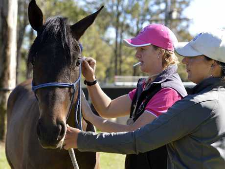 Dr Louise Cosgrove prepares to vaccinate a mare against the hendra virus with owner Maryanne Gough at a Lowood property.