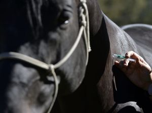 Hendra virus vaccine for horses approved