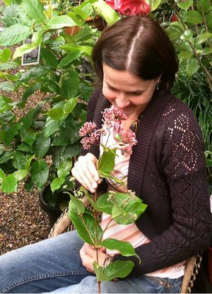 SUPERB: Chelsea van Rijn savours the scent of the Rondeletia amoena which flowers in mid-winter.