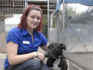 Foster carers needed for dogs as RSPCA centre gets upgrade