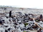 Dead Coral washed onto Kingscliff Beach in Strong wind and wave conditions. Photo: Blainey Woodham / Daily News