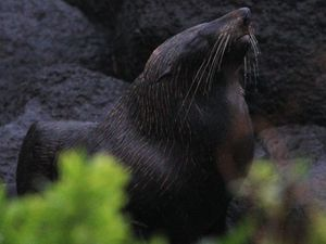Furry visitor gives Greenmount a seal of approval