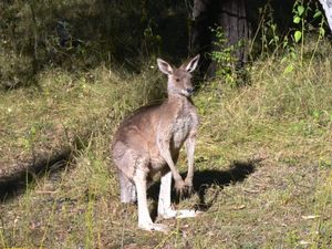 Shooting of roo at airport now under investigation