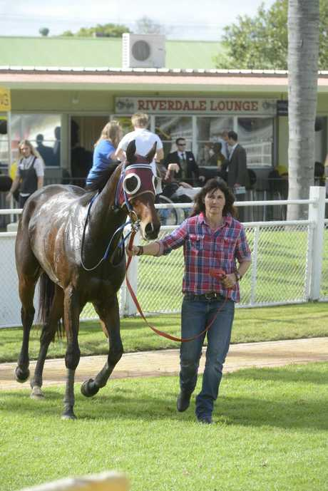 Bindi Cheers pictured leading Zar Zar Binks around the parade ring after it won the 2013 Grafton Cup Prelude.