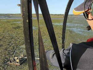Study shows seagrass is recovering in Gladstone harbour