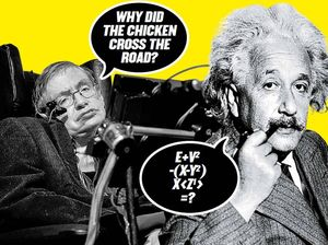 The most intelligent jokes in the world