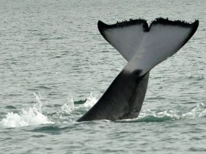Rangers visit site of third dead whale on Fraser Island