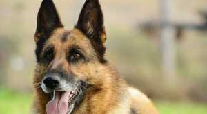 Australian Vets Association recommend avoiding using sticks as toys for dogs.