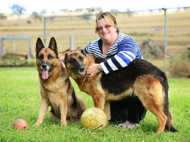 Peak Crossing dog breeder Robyn Outen-Scott never lets her german shepherds Dizzy (left) and Vada play with sticks, which can put dogs at risk of serious injury.