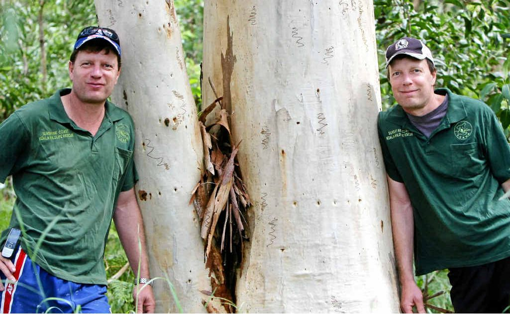 Ray Chambers (left) and Murray Chambers help rescue injured wildlife, especially koalas.