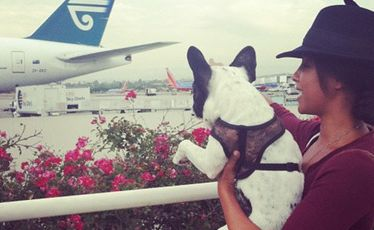 Phylicia Jackson with one of her French bulldogs before they boarded an Air New Zealand flight from LA to London last week.