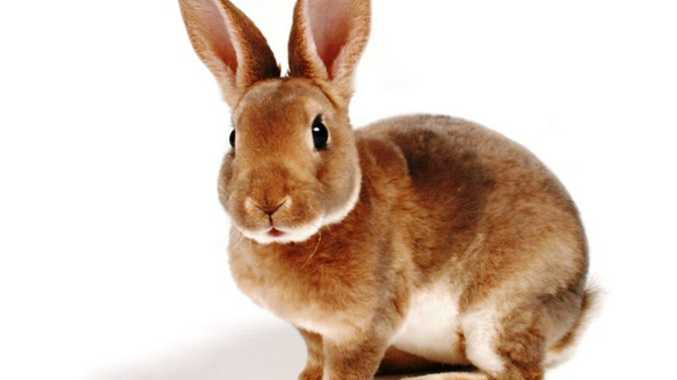 Rabbits are causing havoc at the Gold Coast Airport