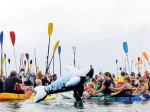 Record numbers at Paddle Out for Whales annual protest