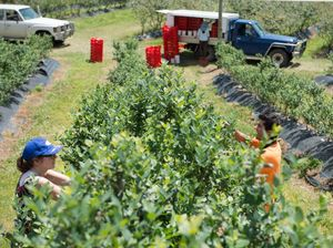 Complaints received from underpaid fruit pickers
