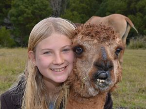 Abandonded alpaca wins over family that saved him