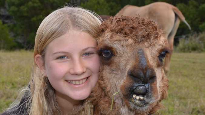 Keira-Lyn Turner with Hosea the Alpaca that they have rescued.